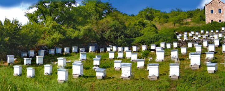 Pčelarstvo Vukoje Bileća 4.png